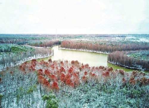 海湾森林公园,风景正好.奉贤区委宣传部/供图